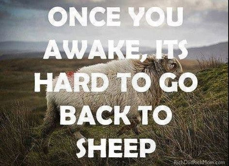 Once You Awake It's Hard To Go Back To Sheep