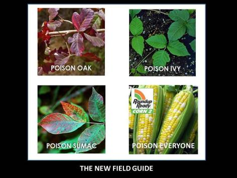 The New Field Guide Poison Oak Ivy Sumac Everyone Roundup Ready Corn 2
