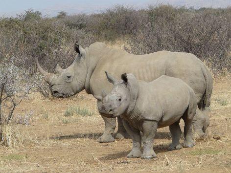 White Rhino Vegan