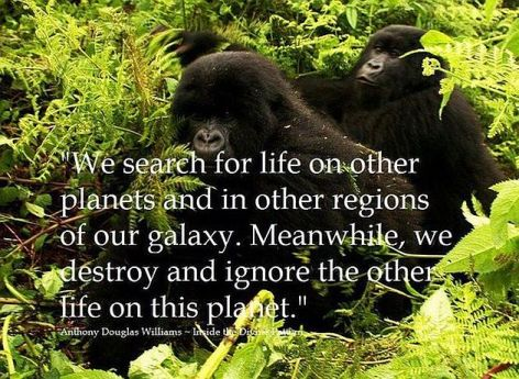 Anthony Douglas Williams We Search For Life On Other Planets And In Other Regions Of Our Galaxy Meanwhile We Destroy And Ignore The Other Life On This Planet