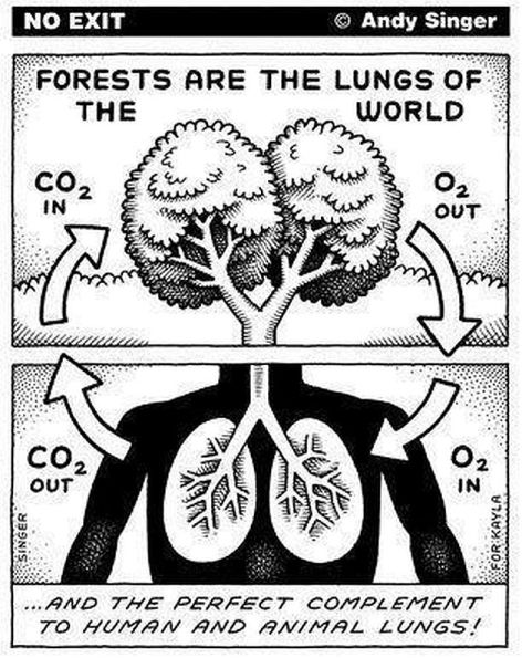 Forests Are The Lungs Of The World And The Perfect Complement To Human And Animal Lungs