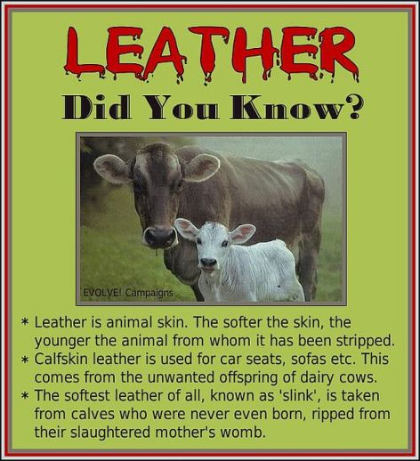 Leather Did You Know