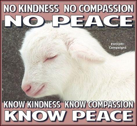 No Kindness No Compassion No Peace Know Kindness Know Compassion Know Peace