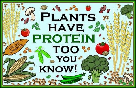 Plants Have Protein Too You Know
