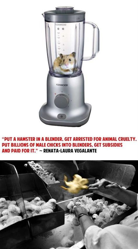 Renata-Laura Vegalante Put A Hamster In A Blender Get Arrested For Animal Cruelty Put Billions Of Male Chicks Into Blenders Get Subsidies And Paid For It