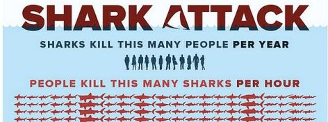 Shark Attack Sharks Kill This Many People Per Year People Kill This Many Sharks Per Hour