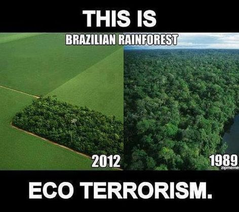 This Is Eco Terrorism Brazilian Rainforest 2012 1989