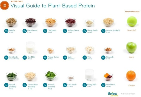 Visual Guide To Plant Based Protein