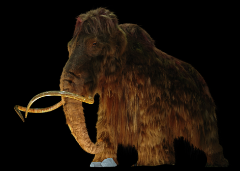 Wooly Mammoth Vegan 2