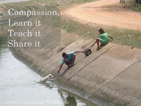 Compassion Learn It Teach It Share It Two Kids Save Dog From Canal