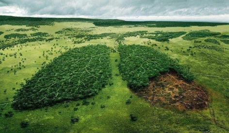 Deforestation Lung Cancer