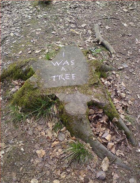 I Was A Tree
