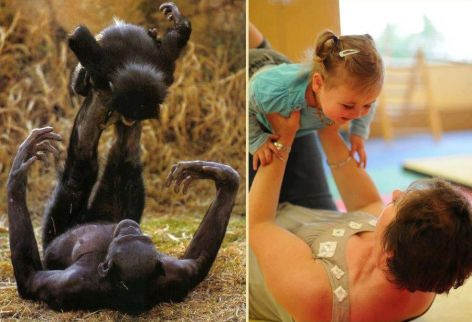Mothers And Children Playing Chimpanzee Human