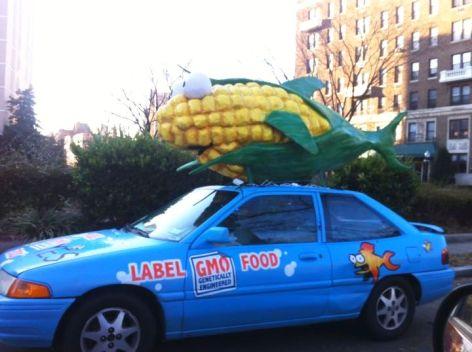 Corn Fish 1