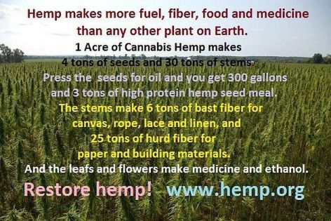 Hemp Makes More Fuel Fiber Food And Medicine