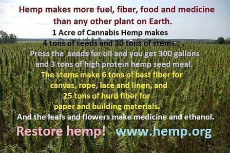 Hemp Makes More Fuel Fiber Food And Medicine