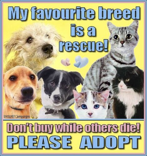 My Favorite Breed Is A Rescue Don't Buy While Others Die Please Adopt