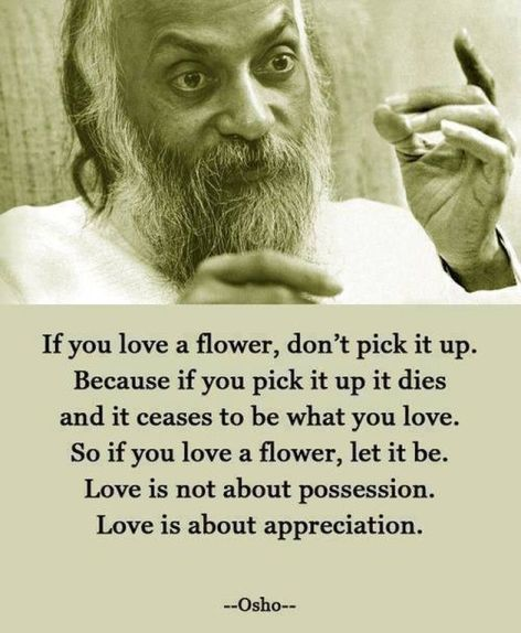 Osho If You Love A Flower Don't Pick It Up