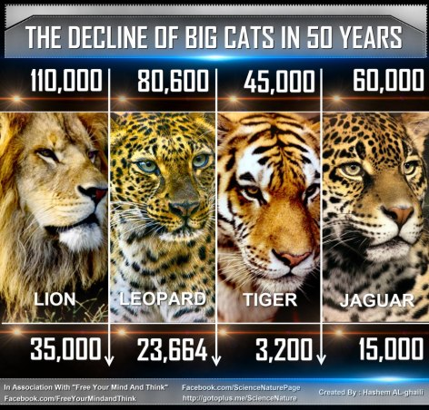 The Decline Of Big Cats In 50 Years