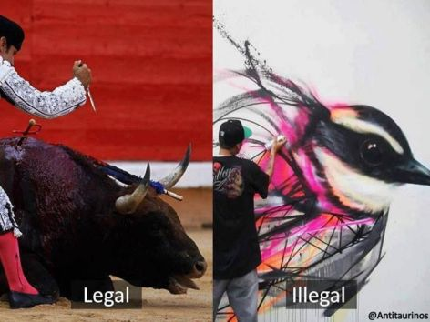 Bull Fighting Legal Street Art Illegal