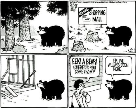 Eek A Bear Where Did You Come From Er I've Always Been Here