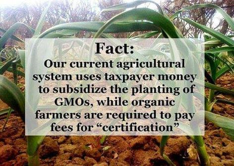 Fact Our Current Agricultural System Uses Taxpayer Money To Subsidize The Planting Of GMOs