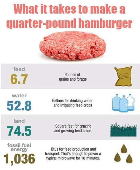 What It Takes To Make A Quarter-Pound Hamburger