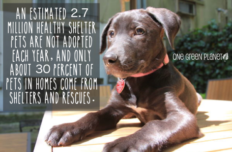 An Estimated 2.7 Million Healthy Shelter Pets Are Not Adopted Each Year And Only About 30 Percent Of Pets In Homes Come From Shelters And Rescues
