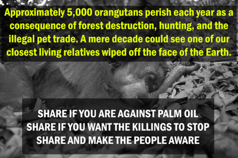 Approximately 5,000 Orangutans Perish