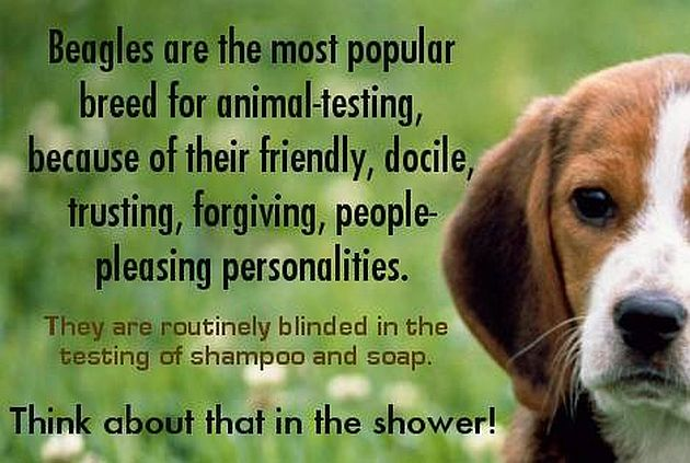 understanding animal testing and cruelty Will animal experimentation be done in the future  led to the enactment in the united kingdom of the first laws against cruelty to animals  to the research defence society (now called understanding animal research.