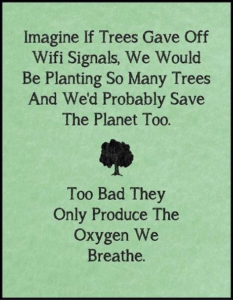 Imagine If Trees Gave Off Wifi Signals