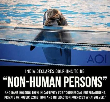 India Declares Dolphins To Be Non-Human Persons