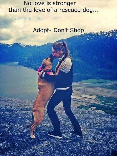 No Love Is Stronger Than The Love Of A Rescued Dog Adopt Don't Shop