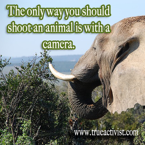 The Only Way You Should Shoot An Animal Is With A Camera