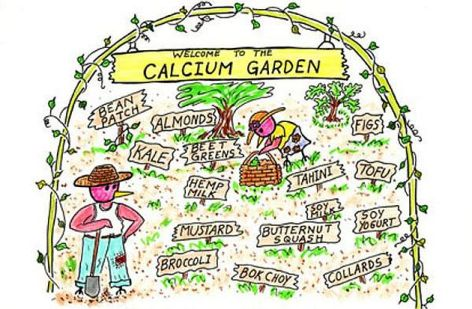 Welcome To The Calcium Garden