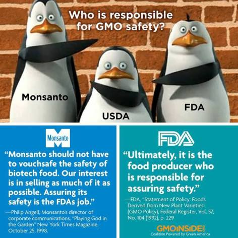 Who Is Responsible For GMO Safety