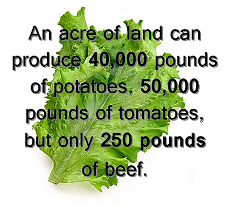 An Acre Of Land Can Produce 44,000 Lbs Of Potatoes, 50,000 Pounds Of Tomatoes, But Only 250 Pounds Of Beef