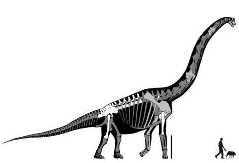 Brachiosaurus Vegan 2