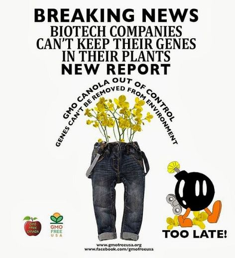Breaking News Biotech Companies Can't Keep Their Genes In Their Plants