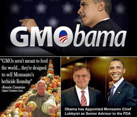 GMObama GMOs Aren't Meant To Feed The World