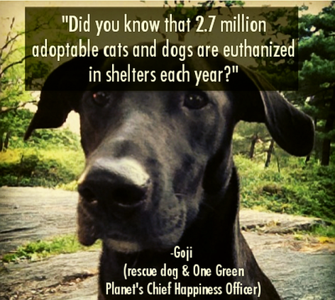 Did You Know That 2.7 Million Adoptable Cats And Dogs Are Euthanized In Shelters Each Year