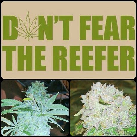 Don't Fear The Reefer