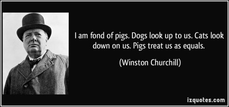 Winston Churchill I Am Fond Of Pigs Dogs Look Up To Us Cats Look Down On Us Pigs Treat Us As Equals