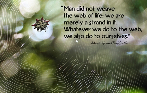 Adapted From Chief Seattle Man Did Not Weave The Web Of Life