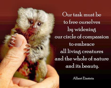 Albert Einstein Our Task Must Be To