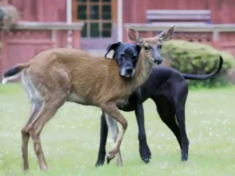 Be Kind Whenever Possible.  It Is Always Possible Dog Deer