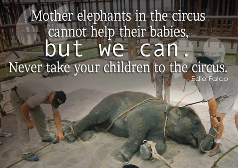 Edie Falco Mother Elephants In The Circus