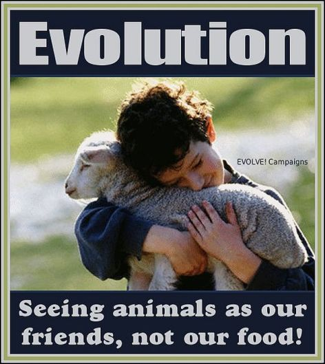 Evolution Seeing Animals As Our Friends Not Our Food
