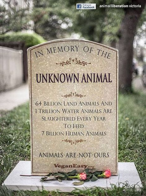 In Memory Of The Unknown Animal