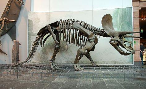 Triceratops Vegan 2